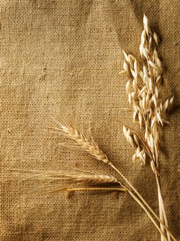 Wheat Ears on Burlap background. Country Style. With copy-space