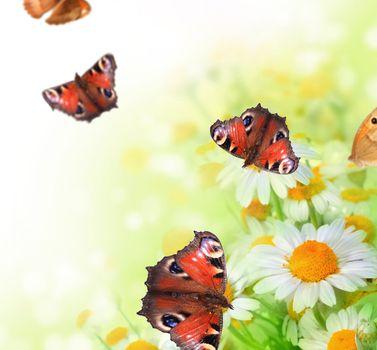 Butterflies On A Flowers