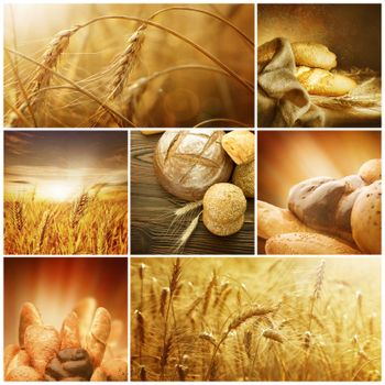 Wheat. Harvest Concepts. Cereal Collage