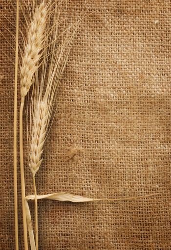 Wheat Ears over Burlap background