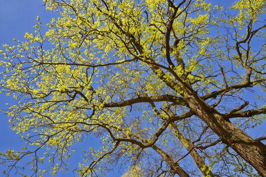 Spring canopy
