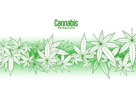 floating marijuana leaves on white background