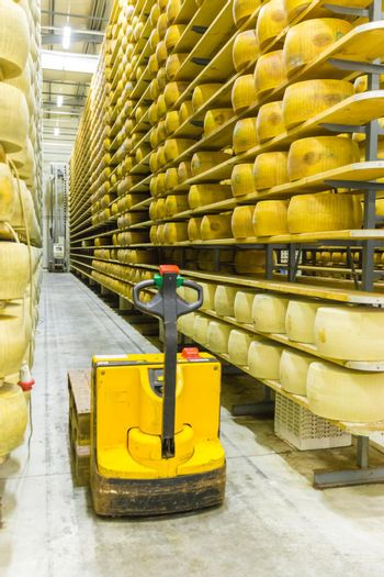 Parmigiano Cheese factory production shelves with aging cheese i
