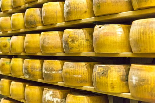 Parmigiano Cheese factory with the aging cheese