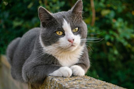 Cute cat on the low wall 2