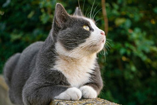 Cute cat on the low wall 3
