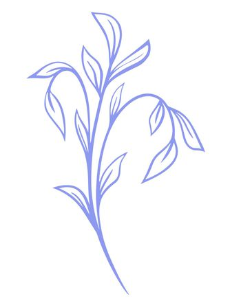 Single graceful branch with elongated leaves vector illustration.