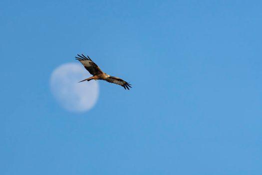 Eagle in blue sky 2