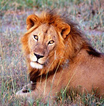 Best wildlife destinations in the world