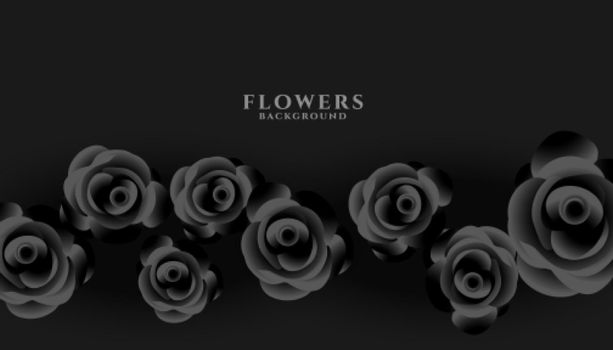 black rose on dark background