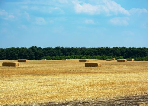 Neat haystacks against the background of the field, forest and blue sky.