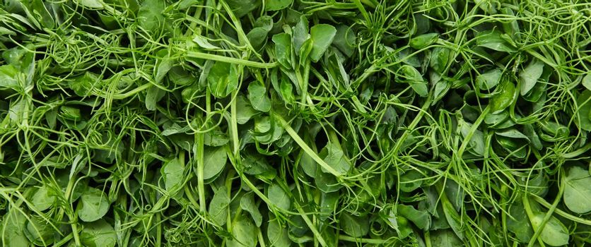 Green peas microgreens background