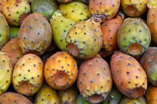 Opuntia cactus fruits on retail display