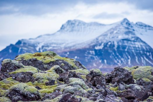 Close up detail of volcanic rock covered in moss in Iceland
