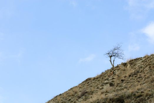 Solitude tree growing on a slope