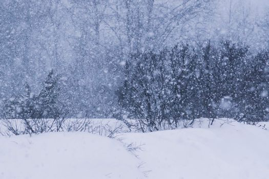 Snowstorm in countryside in wintertime