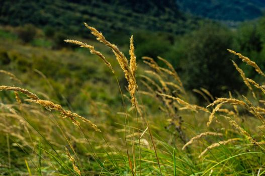 Dry grass as a natural background