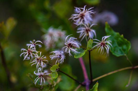 Close up of wild plant