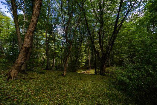 Rural forest on Gombori Pass