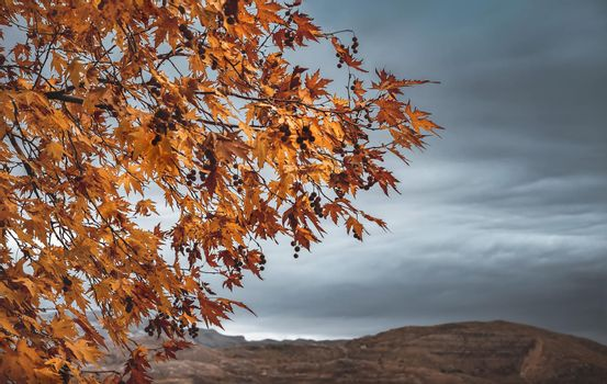 Beautiful Nature in Autumn