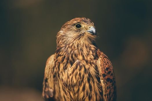 Beautiful Eagle Portrait
