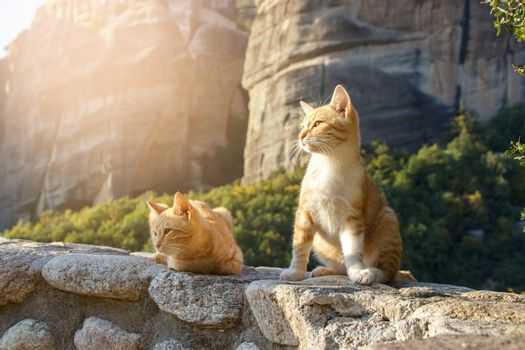 Two ginger stray cats seating in the sun