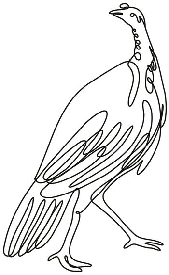 Turkey Viewed from Side Continuous Line Drawing