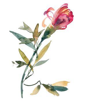 Watercolor chrysanthemum bud