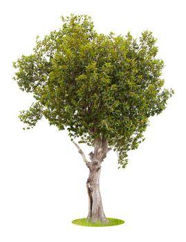 The freshness big green tree .