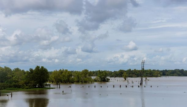 Flooded area of field and forest due to flood