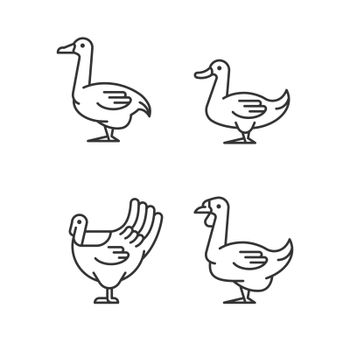 Waterfowl linear icons set