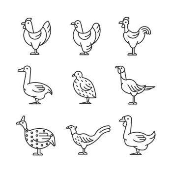 Domesticated birds linear icons set