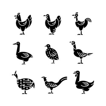 Domesticated birds black glyph icons set on white space