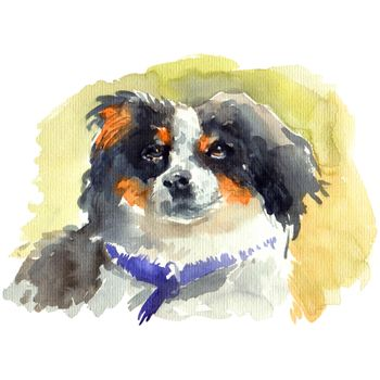 Watercolor portrait of fluffy dog