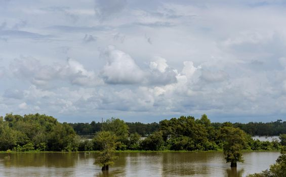 Horizontal landscape with flooded the valley field and trees