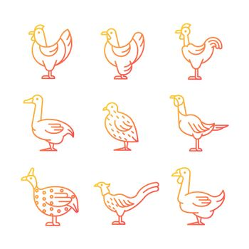 Domesticated birds gradient linear vector icons set