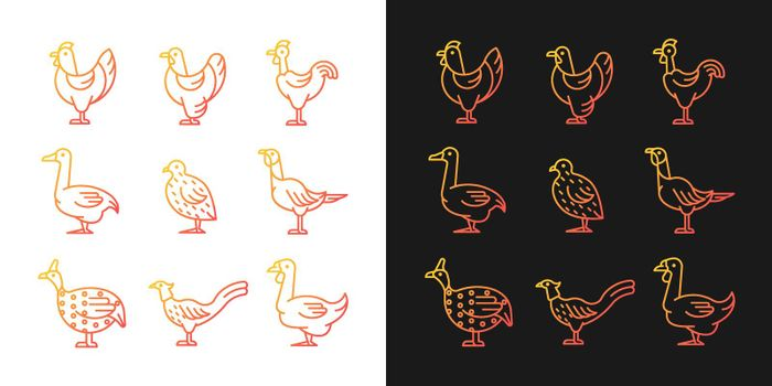 Domesticated birds gradient icons set for dark and light mode