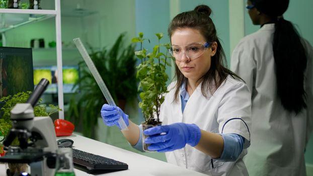 Botanist researcher measure sapling for botany experiment