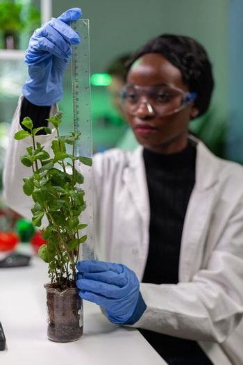 African researcher measure sapling for botany experiment