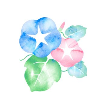 Summer motif watercolor painting illustration for summer greeting card etc. | morning glory flower