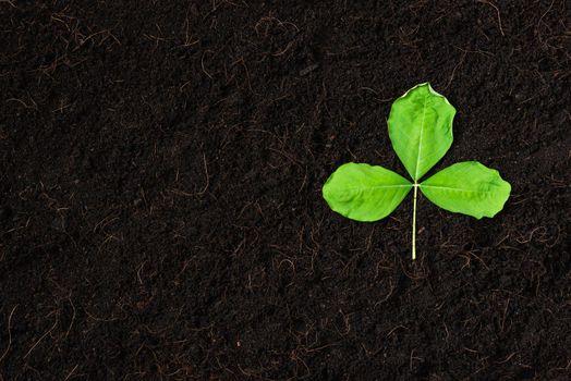 Top view of Green leaves on fresh black soil