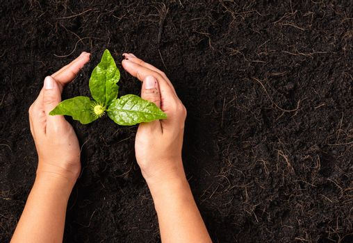 Hand of a woman planting green small plant life on compost fertile black soil