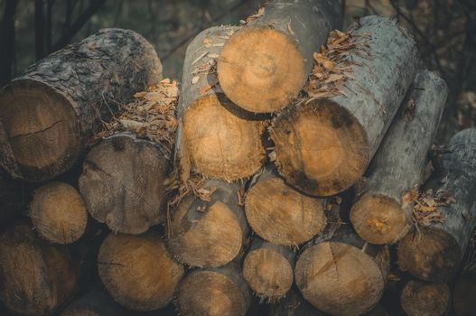 A stack of sawn logs. Firewood harvested for the winter. Wood fuel