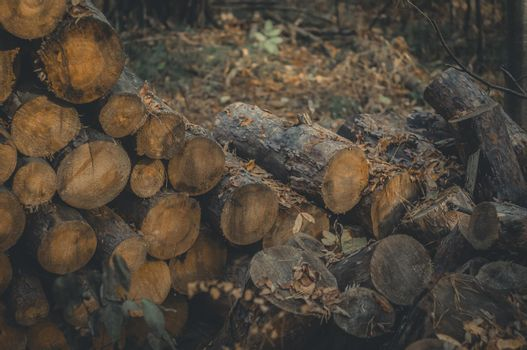 Sawn logs in the forest. Stack of logs for harvesting firewood for the winter. Wood fuel.