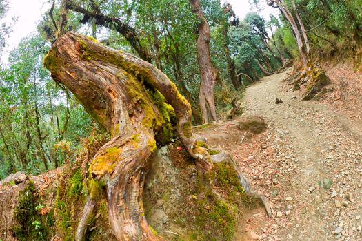Mountain Forest Footpath, Annapurna Conservation Area, Himalaya, Nepal