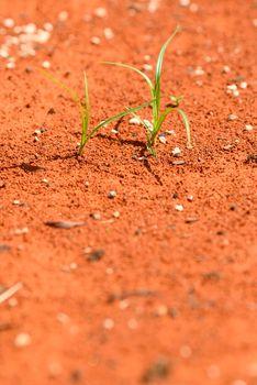 green plants growing on red desert