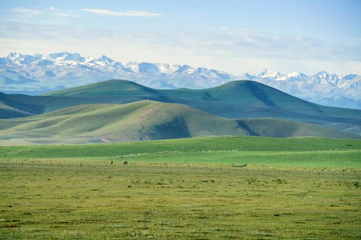 Grasslands and snowy mountains in the sun.