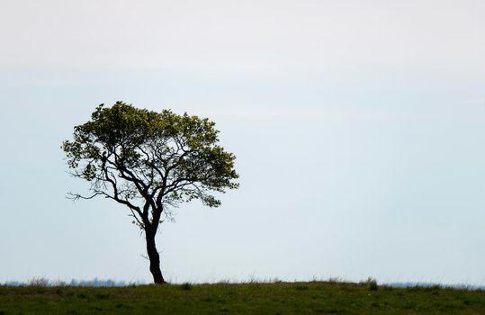 Prairie Lone Tree