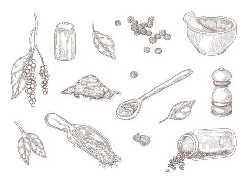 Hand drawn vintage sketch of different kinds of black pepper