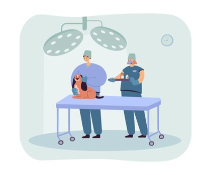 Vets examining dog and giving medicine